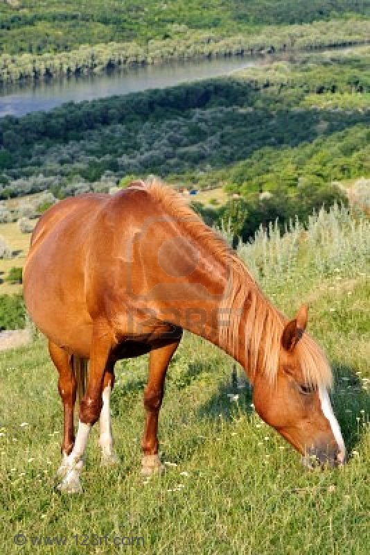 Ton cheval te ressemble ...