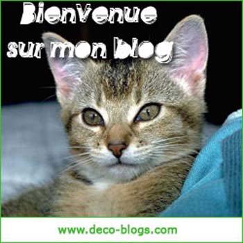 Bienvenue sur Mon Blog!!!