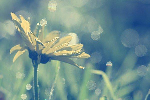 """""""Je me demande combien de temps encore ces images vont rester nettes, limpides, avant de se déformer, puis de se brouiller, puis de s'effacer ; avant que je ne les oublie. J'aimerais les serrer contre moi, comme on serre contre soi un corps aimé, de toutes ses forces, pour le retenir. Mais je sais bien que, de la même manière qu'on ne peut retenir un amour, on ne retient rien de son passé, il s'échappe lentement, chaque jour davantage, et on ne choisit pas ce qu'on en garde."""""""