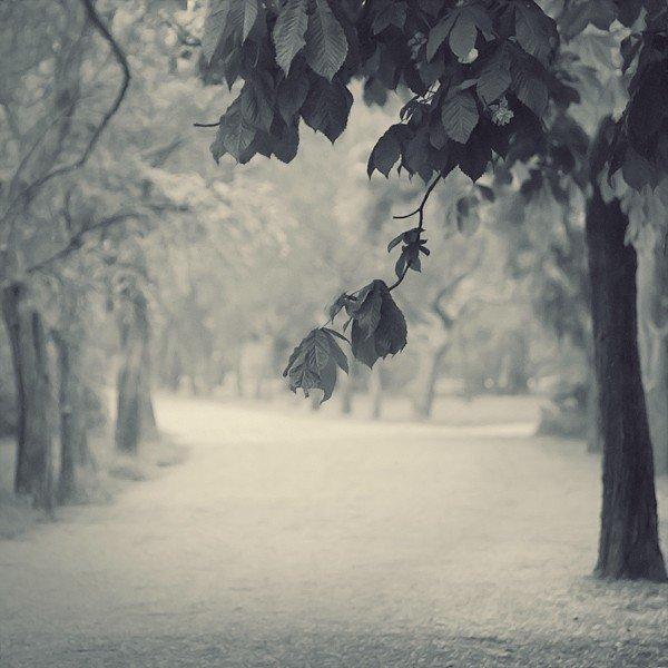 """""""Oh ! je voudrais tant que tu te souviennes des jours heureux où nous étions amis. En ce temps-là la vie était plus belle, et le soleil plus brûlant qu'aujourd'hui. Les feuilles mortes se ramassent à la pelle. Tu vois, je n'ai pas oublié... Les feuilles mortes se ramassent à la pelle, les souvenirs et les regrets aussi. Et le vent du nord les emporte, dans la nuit froide de l'oubli. Tu vois, je n'ai pas oublié la chanson que tu me chantais. C'est une chanson qui nous ressemble. Toi, tu m'aimais et je t'aimais. Et nous vivions tous deux ensemble, toi qui m'aimais, moi qui t'aimais. Mais la vie sépare ceux qui s'aiment, tout doucement, sans faire de bruit. Et la mer efface sur le sable les pas des amants désunis."""""""