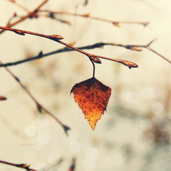 """""""Si la beauté peut passer ou lasser, si elle peut s'estomper ou finir par ennuyer, le charme, en revanche, ça ne part jamais, c'est là, pour toujours, ça reste, intact."""""""