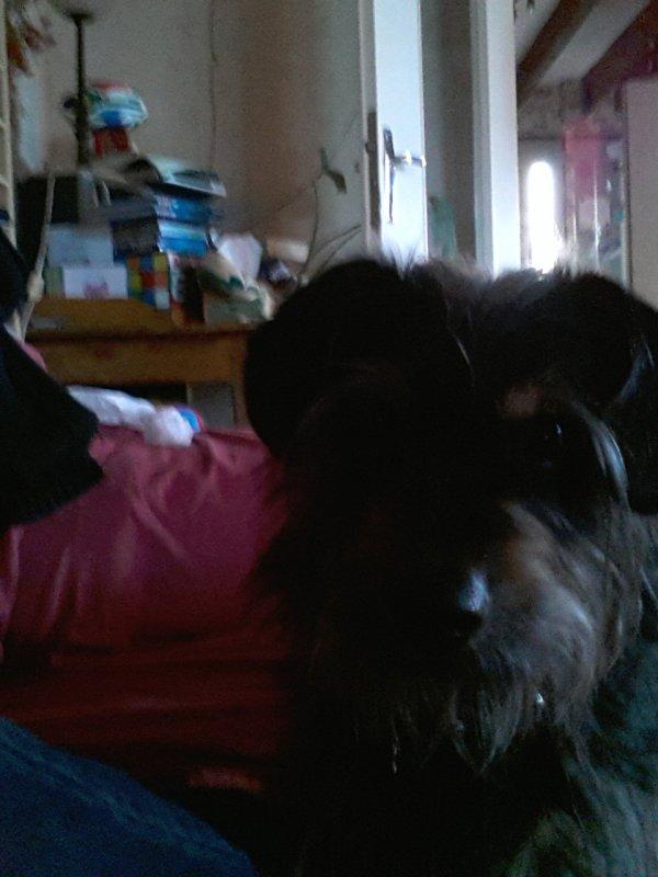 voici mon chien