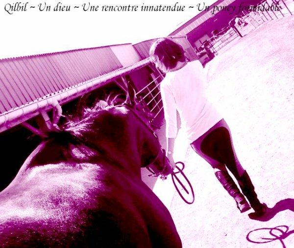 • Petit article pour dire combien je tiens à ces poneys •