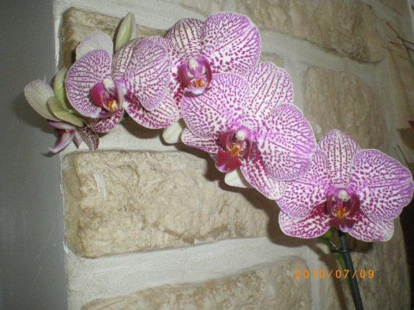 POUR ELLE Jai changée  le TOUT !  SON POT transparent  EST NEUF ! SON terreau spécial orchidées ses2petits tuteurs aussi