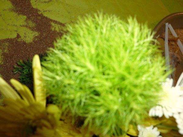 jolie fleur pour le plaisir de moi et de certaines des blogs de fleurs!!un oeillet de poête hollandais