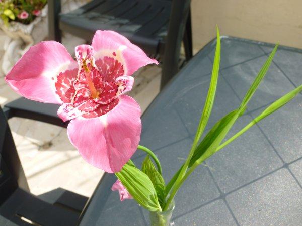 tous a l'abri pour les voir fleurir sans ce casser par l'eau et par les orages