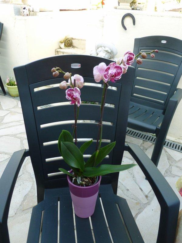 BONJOUR!!!!ma toute nouvelle orchidée sur deux tiges