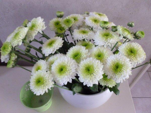 photos AVEC bien  DU RETARD POUR FAIRE''' MES PETITES COMPOS florales''''   as suivre                    DU 25 AOÜT