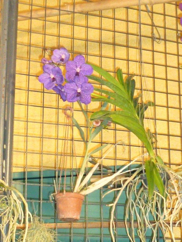 VUE  des orchidés en exposition !une toute 1ére pour moi