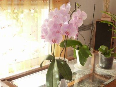 bonjour merci bien reçu votre orchidée