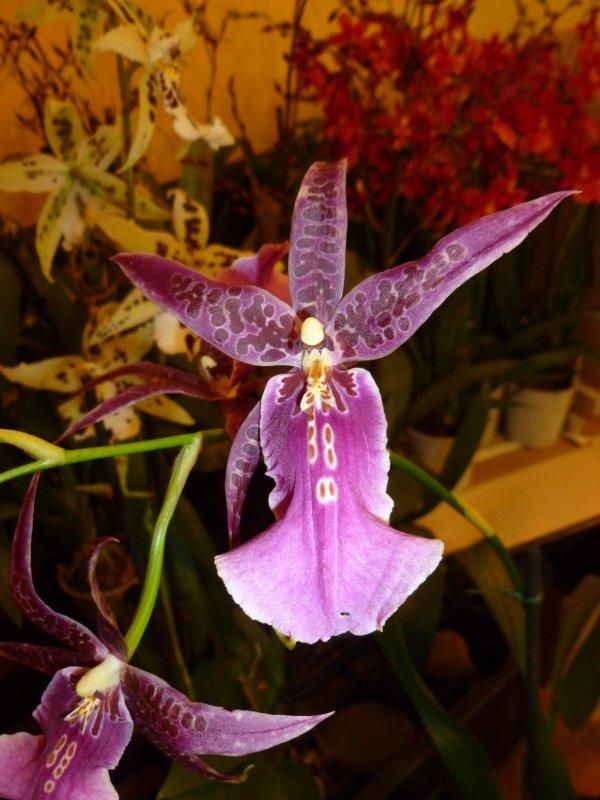 autre orchidée vue a l'exposition