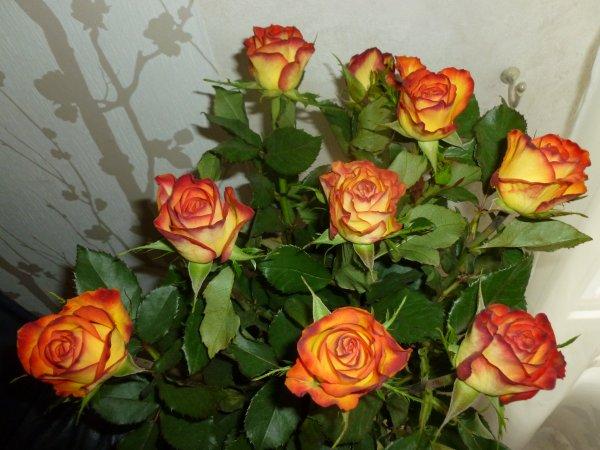mon dernier bouquet de roses ! BON WEEKEND