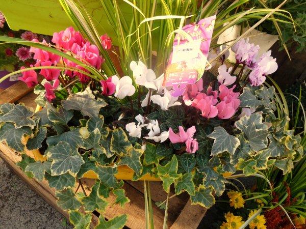 BON VENDREDI A TOUTES'' des belles jardinières''