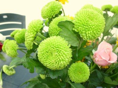 comment se nomme ces fleurs ! merci DES SANTINIS