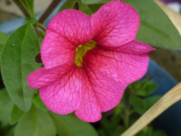 en couleur fushia !  toute  petite fleur de