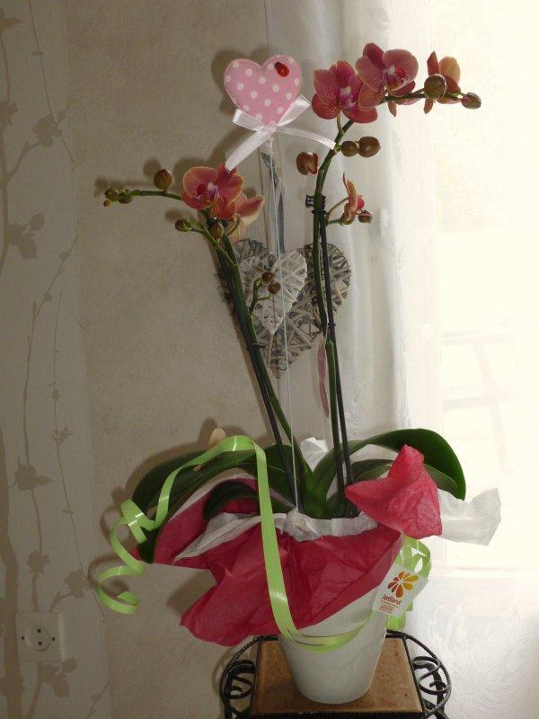 ma toute nouvelle orchidée