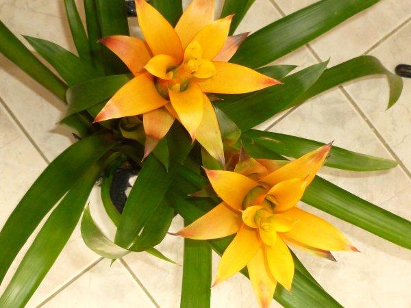 et aussi une plante fleurie
