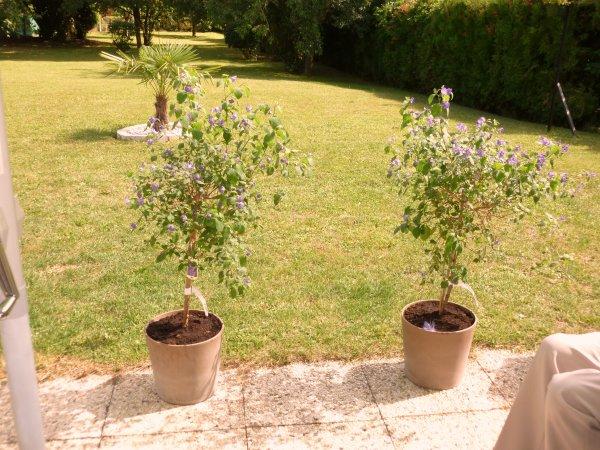 du nouveau chez mes jeunes 2 belle plantes  pour leur terrasse !            J'AIME