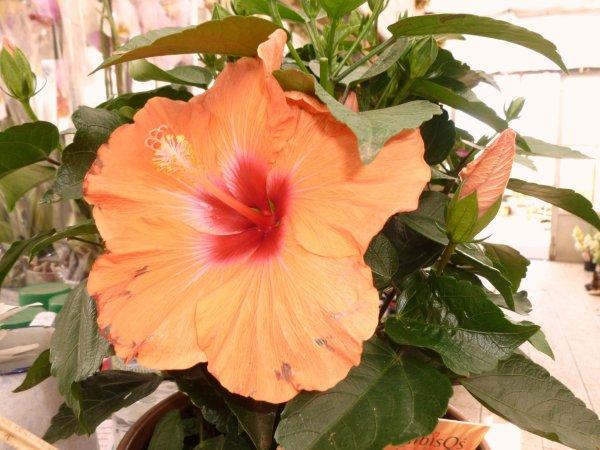 la jolie fleur photo prise c==
