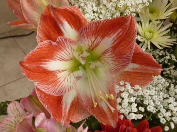 juste une fleur de mon gros bouquet