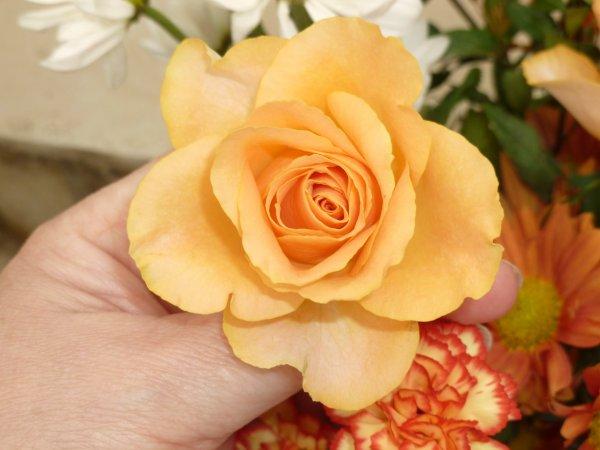 POUR DEMAIN   le 8 AVRIL !rien qu'une petite rose   !  POUR FËTER   les saintes  Julie !