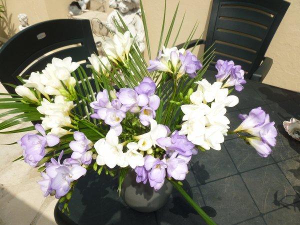 mon bouquet de freesias de vendredi !chouette a 10h le soleil viens d'arriver !enfin
