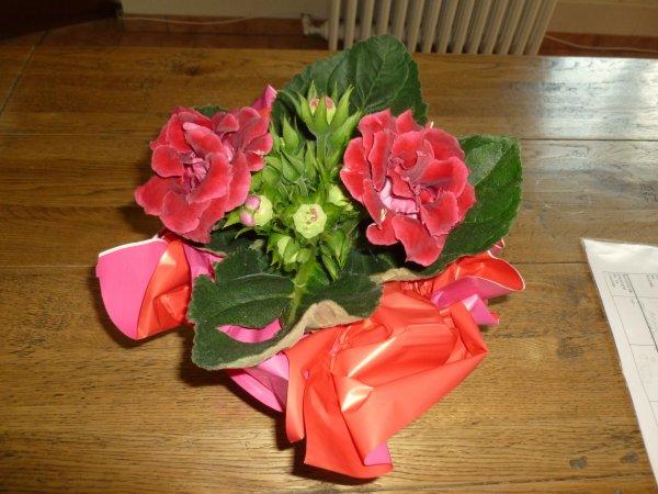 BELLE JOURNEE  une tres jolie plante fleurie un  gloxinia