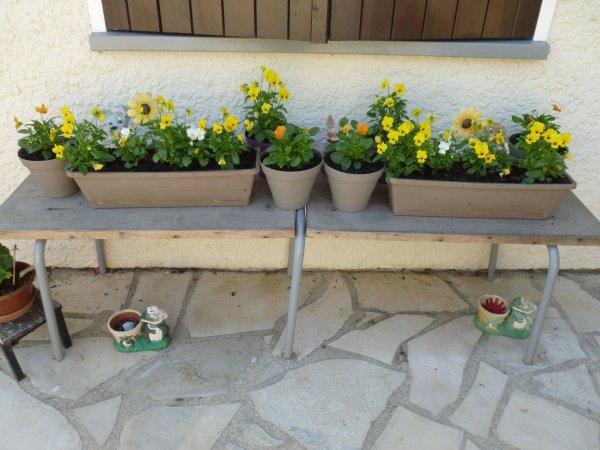 mes jardinières d'automne !bon mercredi