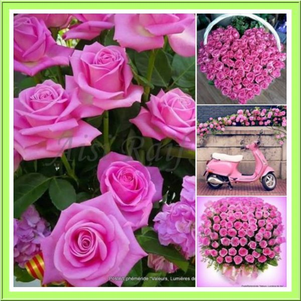 En ce moment je suis dans ma période de jolies.     fleurs et surtout les.  ROSES .. Les roses et ençore les roses .