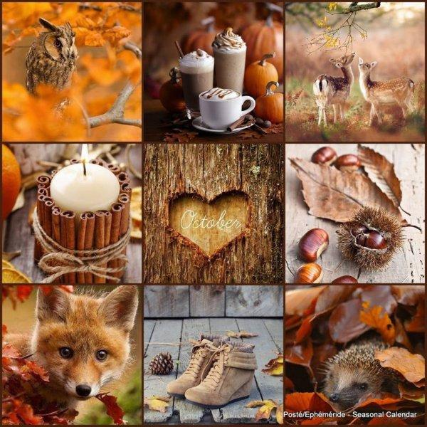 bon MOIS D'OCTOBRE  UN vrai   Temps. d'automne grisaille et vent