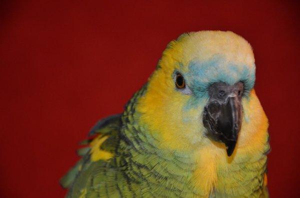 Kiko, ou la vie en vert...