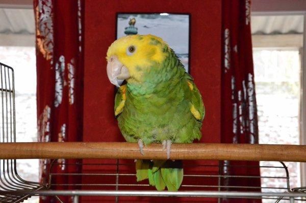 un nouvel arrivé, voici Shrek, amazone à tête jaune.