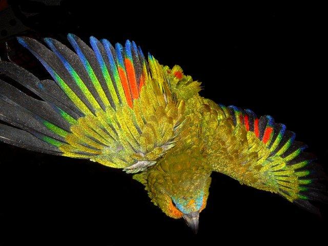 les plumes du bonheur