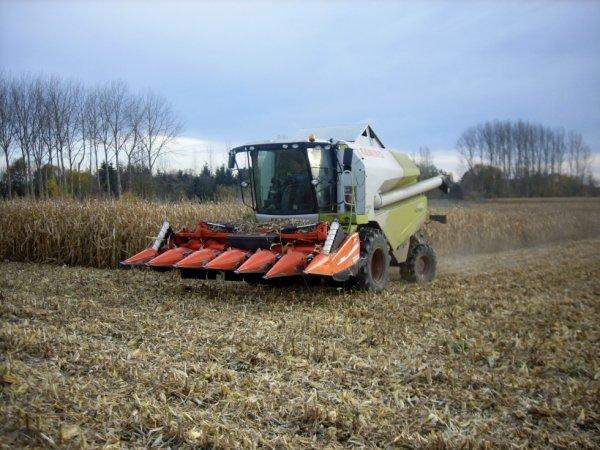 Récolte de Maïs Grain ; T. Caluwaerts