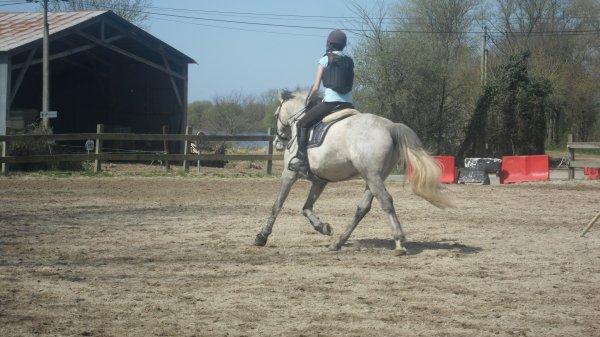 L'équitation, un mode de vie, une religion, mais avant tout un sport.♥.