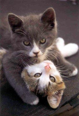 ils sont trop mignon ces chats !!!!trop beau !! $)