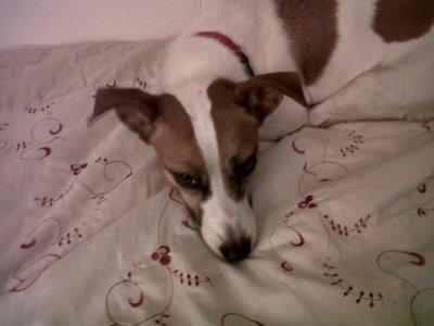 !! Bounty, mon chien !  ;-)