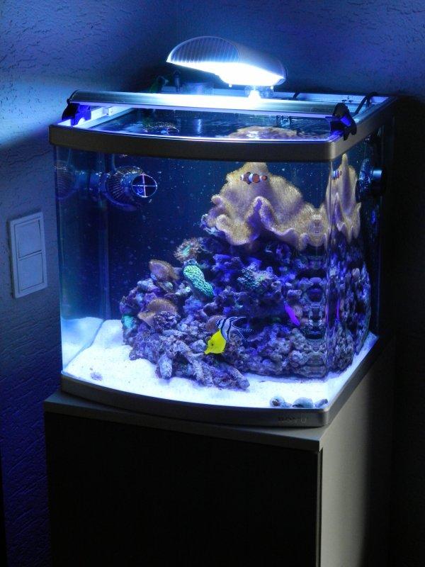 mon nano reef