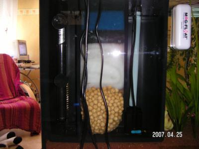 Changement d 39 eau mon aquarium - Aquarium changer l eau ...