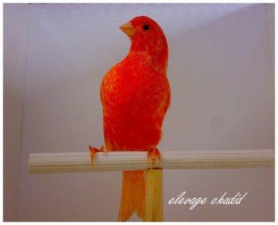 lipo rouge schimmel 2010
