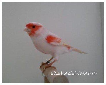 Mes oiseaux 2011