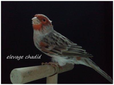 oiseau 2011