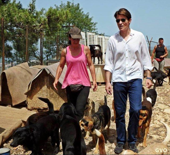 Goran au refuge pour chien à Dubrovnik ,new photos suite...