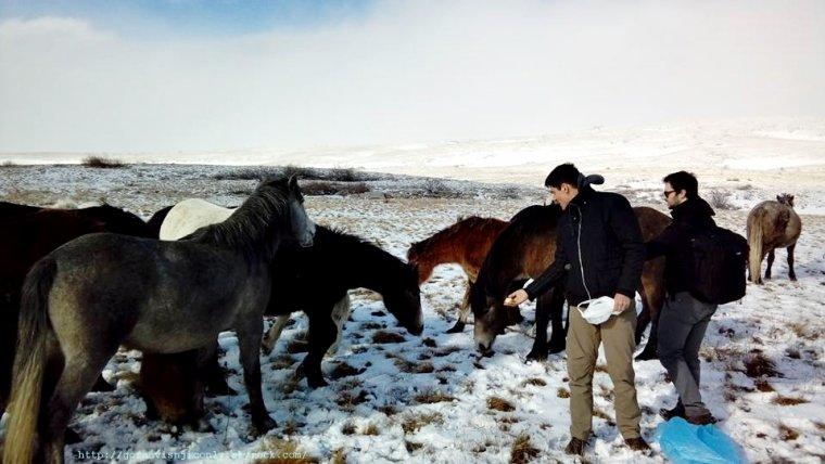 Goran et les chevaux en croatie