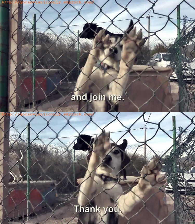 Goran de retour pour la cause des chiens en Croatie