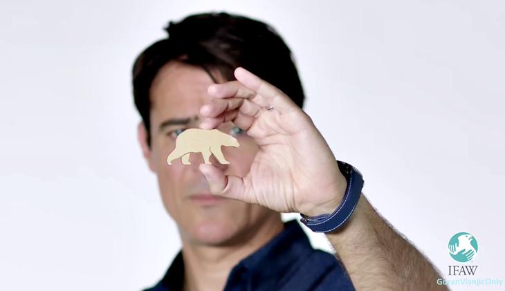 Goran pour la cause des ours polaires