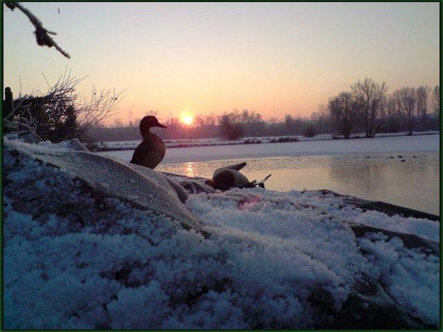 Notre passion....les oiseaux migrateurs,la Nature et la chasse du gibier d'eau.