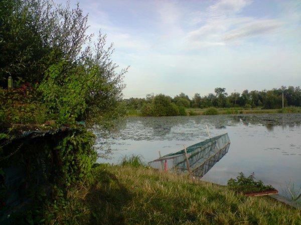 Le paysage dans notre région (1bis) - L'été