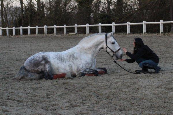 ''On refait toujours la même chose, avec chaque cheval. Chaque jour, on refait ses gammes inlassablement, il n'y a rien de plus routinier. Pourtant on ne s'ennuie jamais, parce que l'ennui vient quand on ne se regarde plus, et on ne peut pas ne pas regarder un cheval. Regardez l'autre, regardez le vraiment, et jamais, jamais vous ne vous ennuierez. C'est ça, le sentiment équestre. Et ça n'est rien d'autre que de l'amour.''