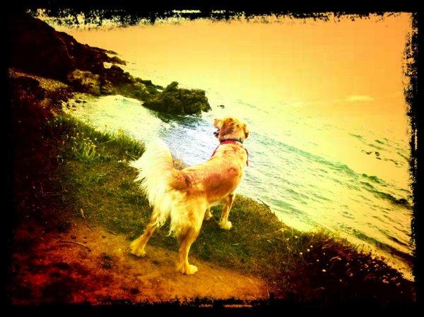 Mon amour de chien ;)